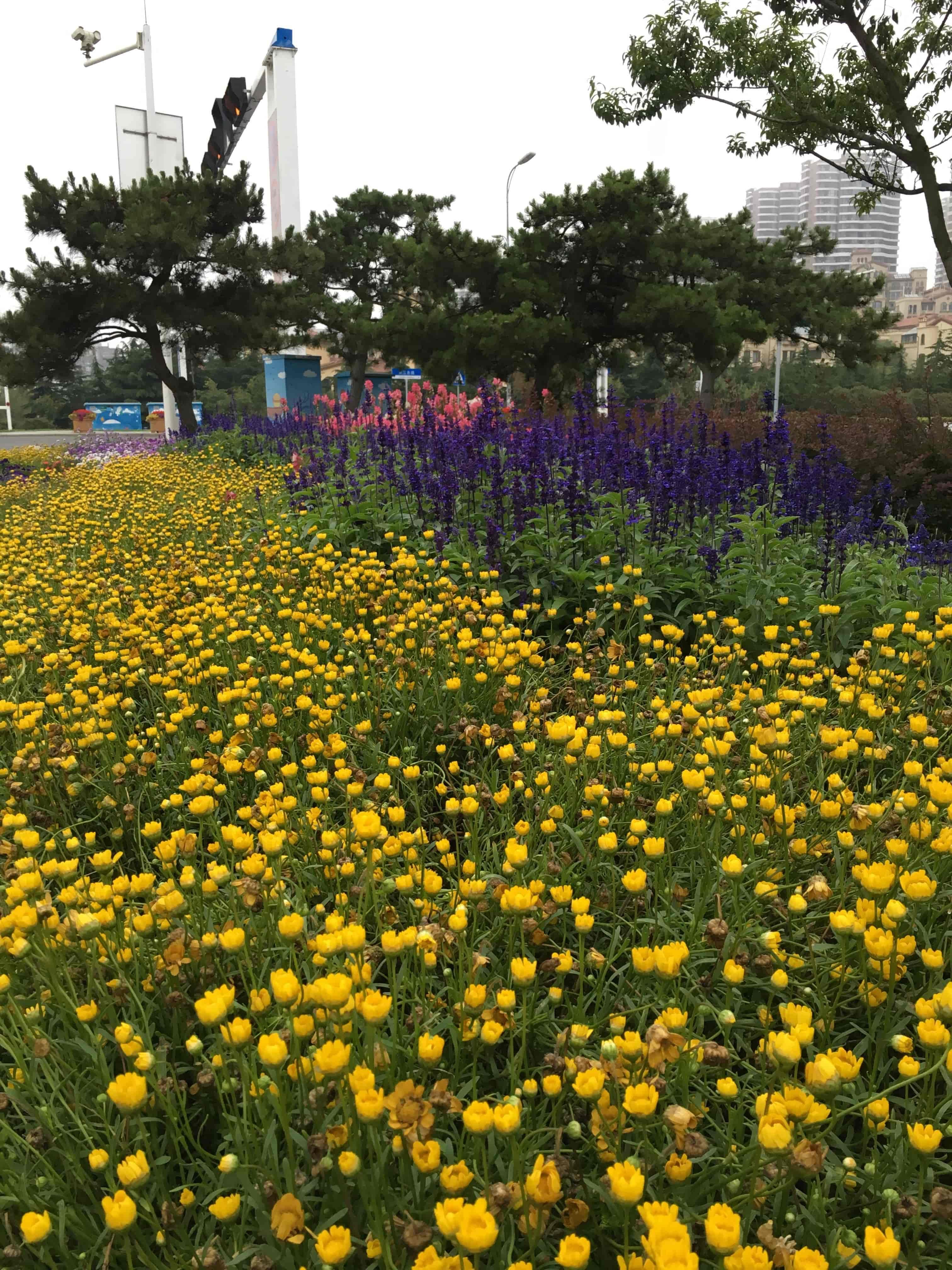 街道上的花